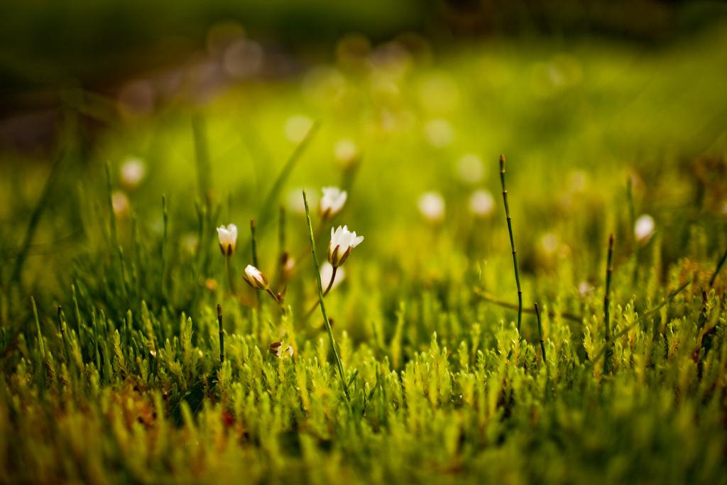 Мох и цветы