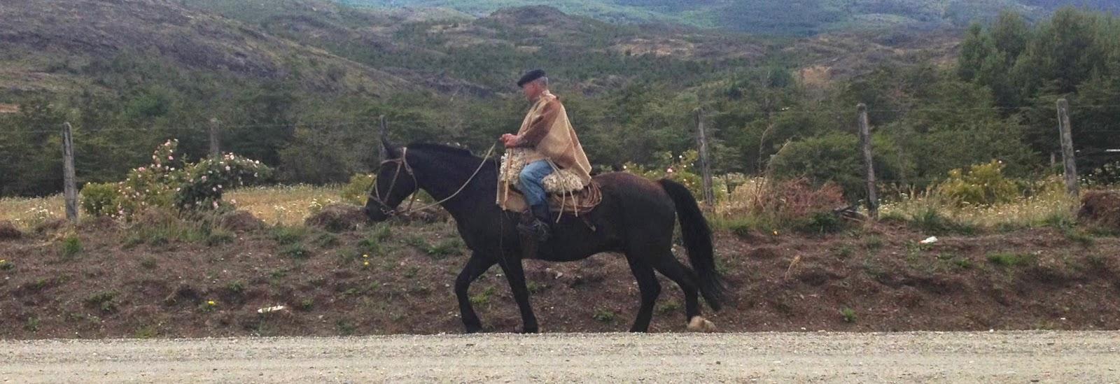 Гаучо на лошади