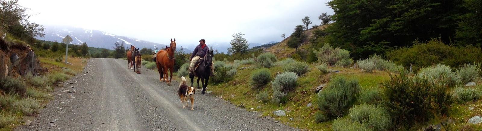 Гаучо, лошади и собака